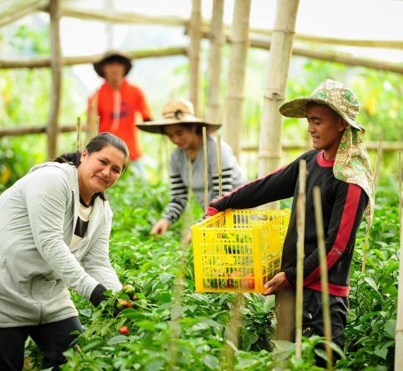 Jollibee Group Foundation's Farmer Entrepreneurship Program: Enabling Growth, Sharing Joy